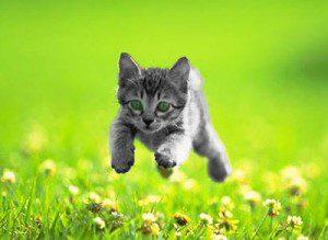 Este amor de gato es para quitarle un poco de gravedad a la entrada. Tranquilos, nadie lo viola en la peli